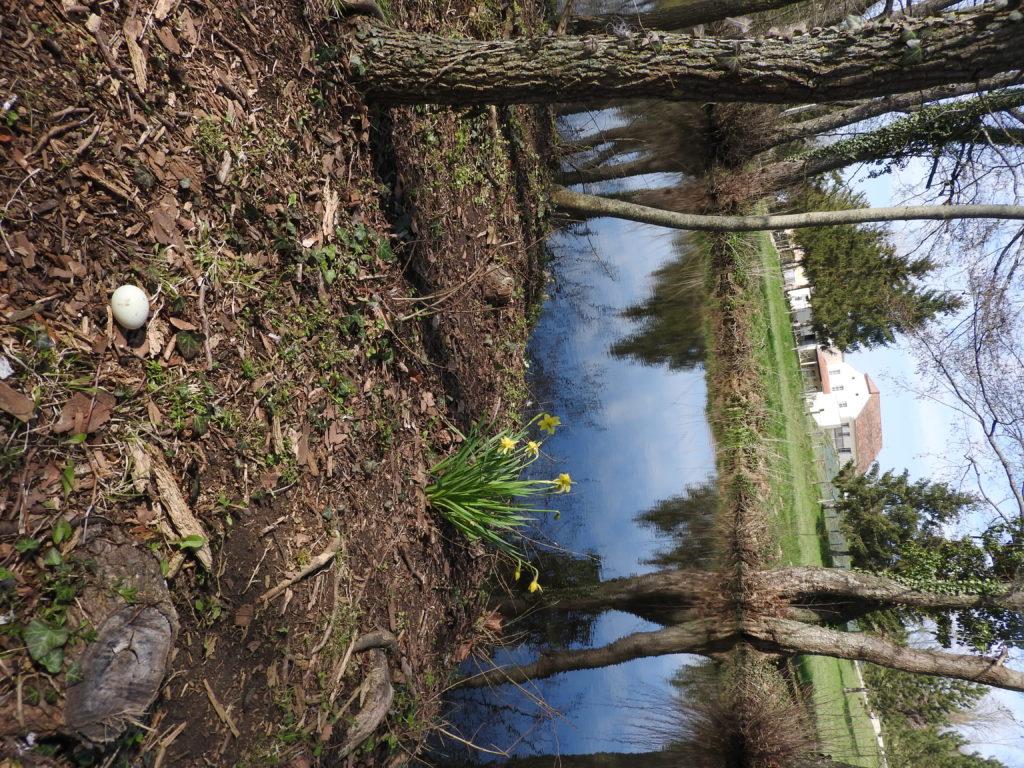 laiterie vue depuis l'ile avec oeuf de cane...