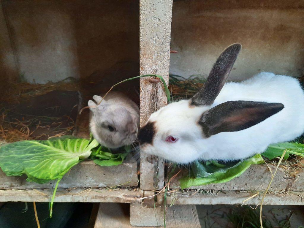 bisous pour les lapins
