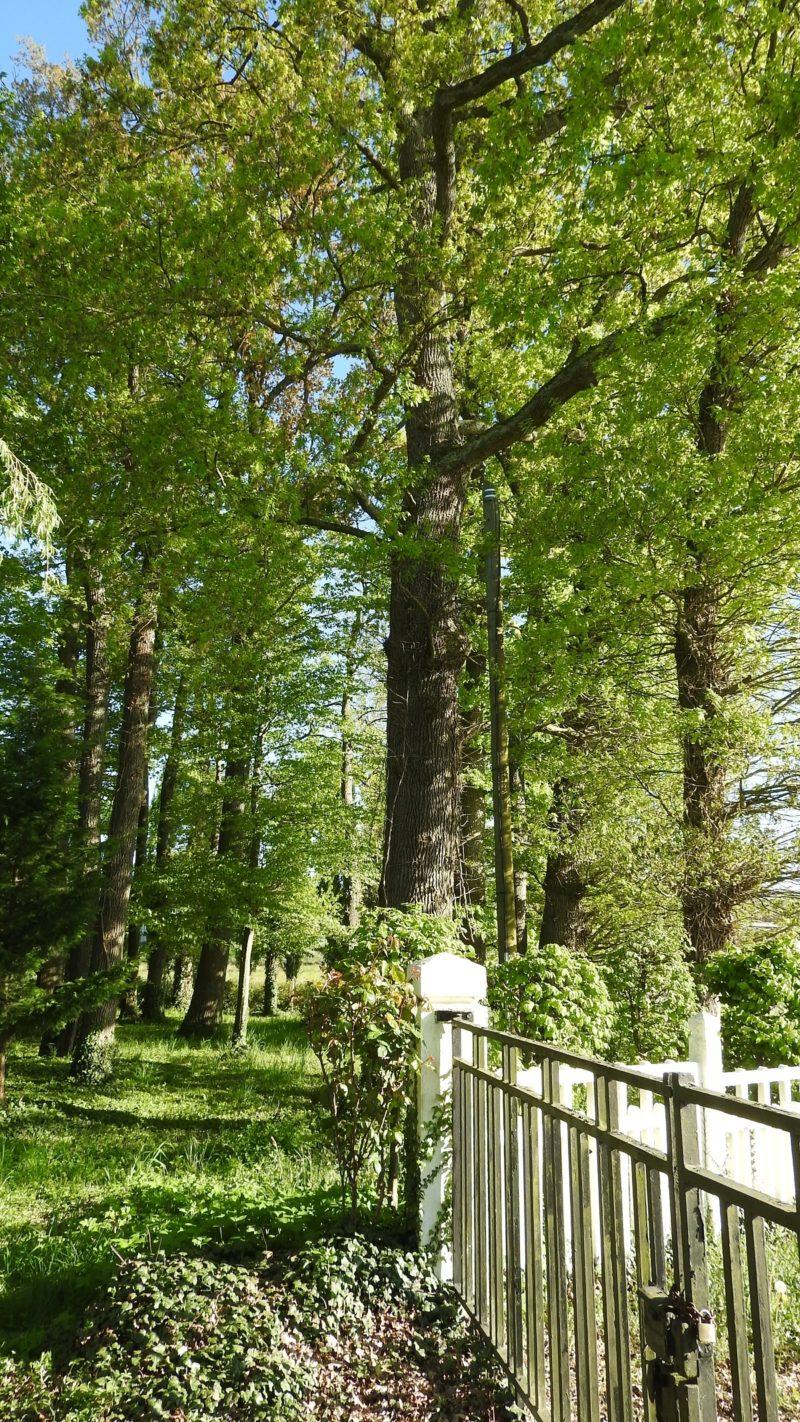 belle bois route redimentionnée