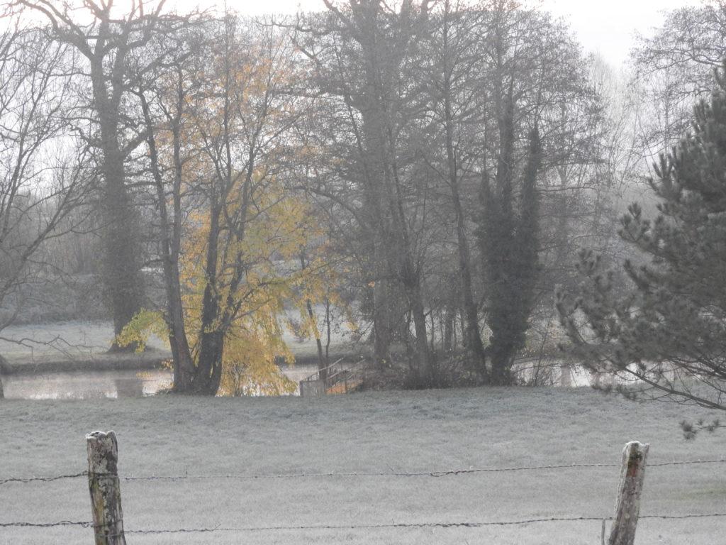 L'étang dans la brume avec quelques feuilles avant le gel fatal
