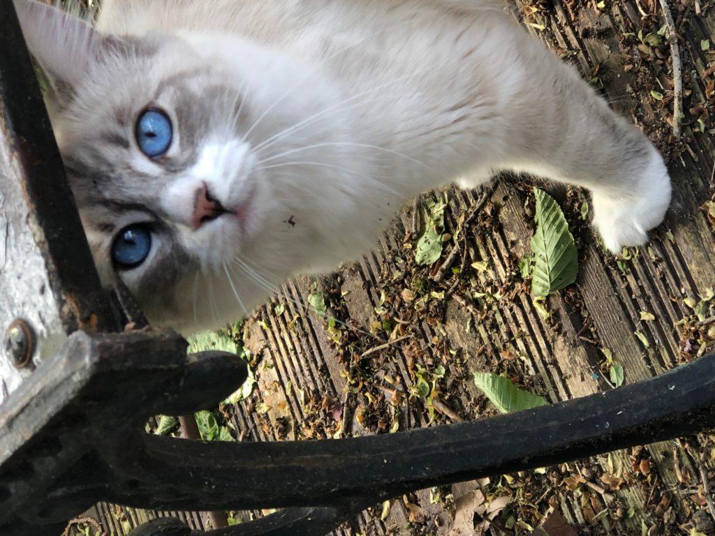Zoé et ses yeux bleus