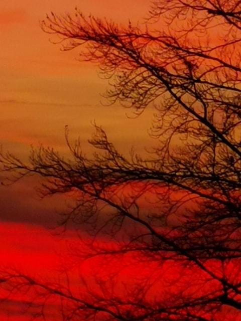 coucher de soleil tel un tableau