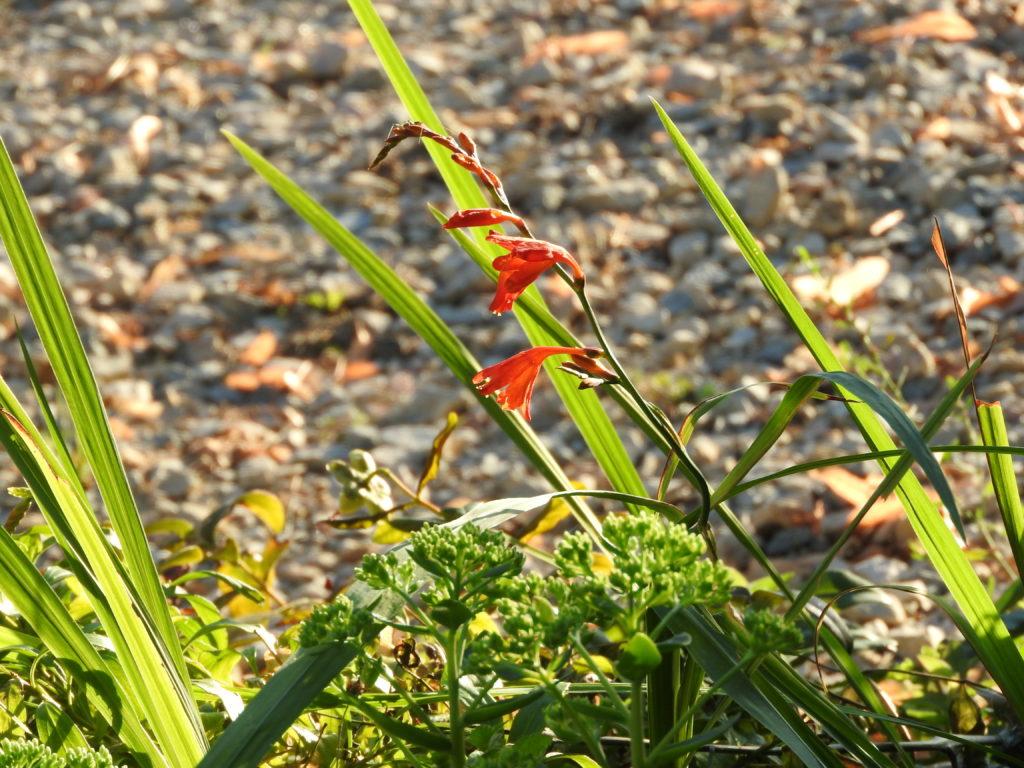 Plante offerte par un giteur venant de l'ile d'Oléron