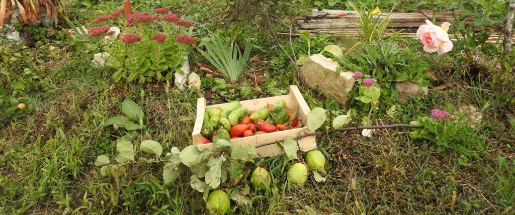 Productions du jardin au Gite de la Charmotte