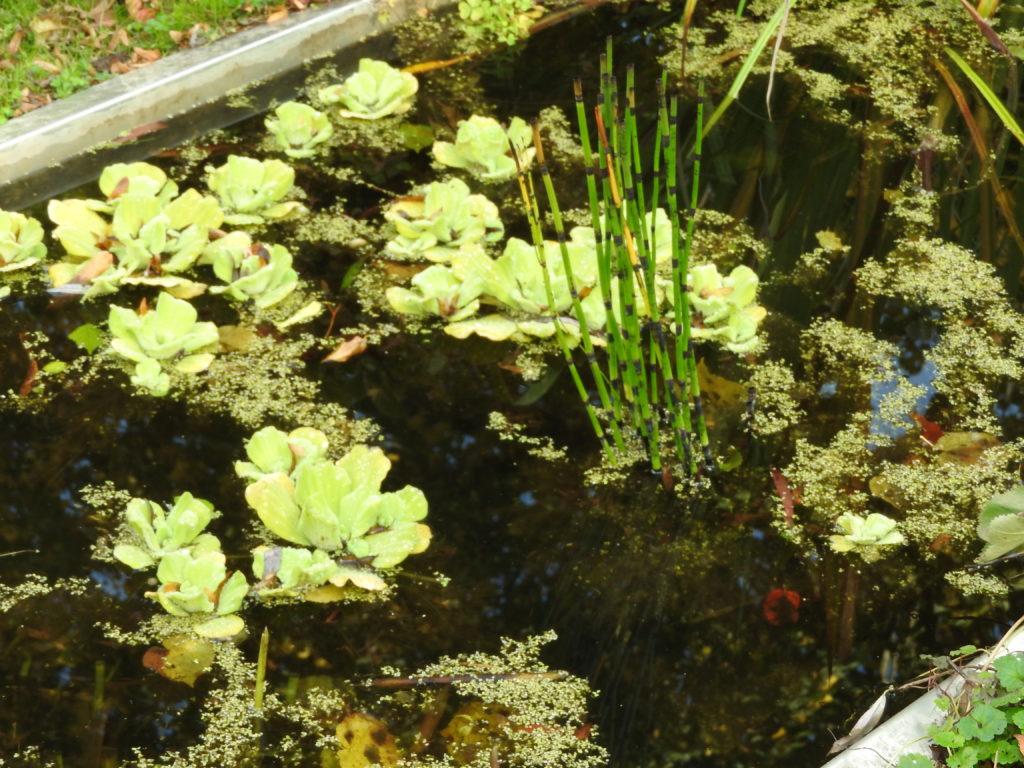 Détail du bassin à poisson
