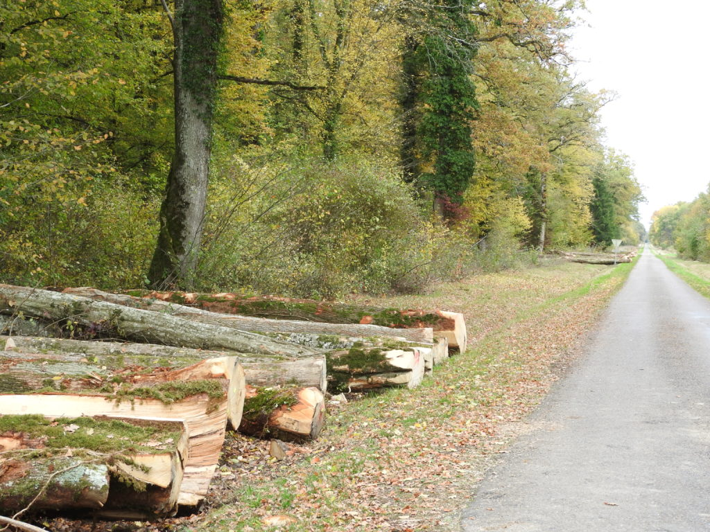 Le bois omniprésent