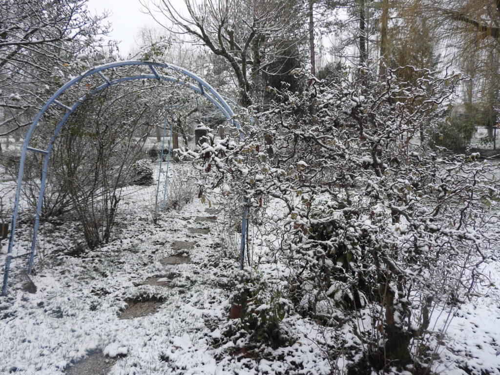 La neige sublime la végétation