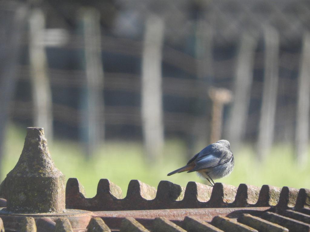 oiseau posé sur l'ancienne roue de moulin
