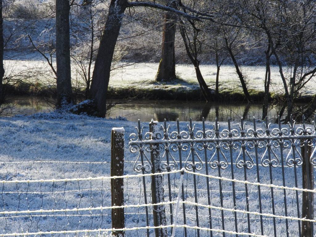 La vie sur l'étang qui se réveille