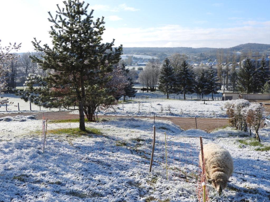 les moutons et l'étang derrière
