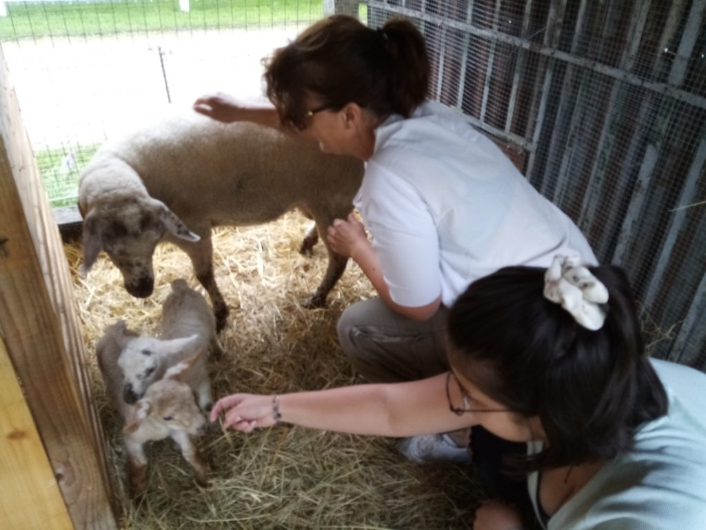 Marraines des agnelles 2 belges en vacances à la laiterie