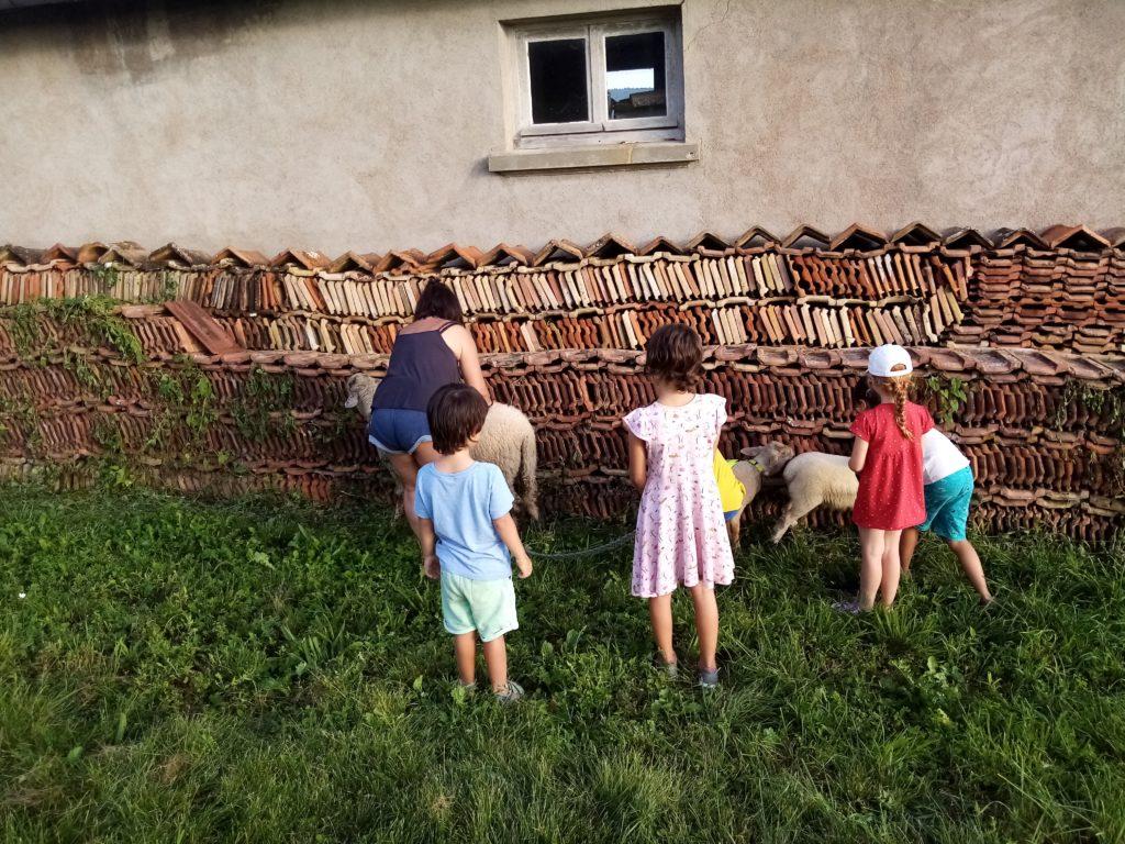 Avec les agnelles qui broutent le long des tuiles